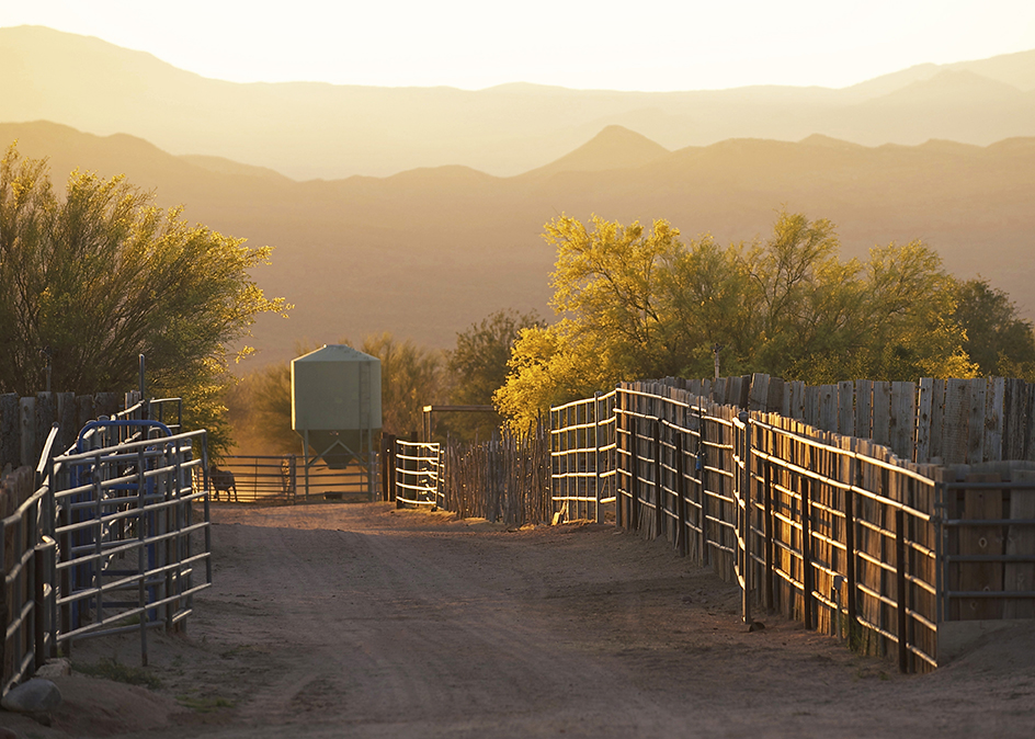Arizona Horse Ranch For Sale
