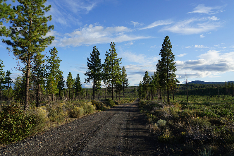 Productive timber property in Oregon