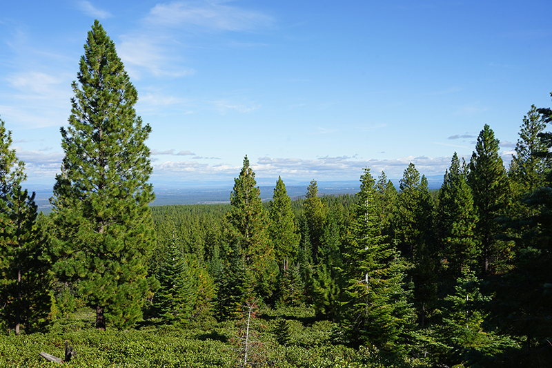 Timber land in Oregon for sale