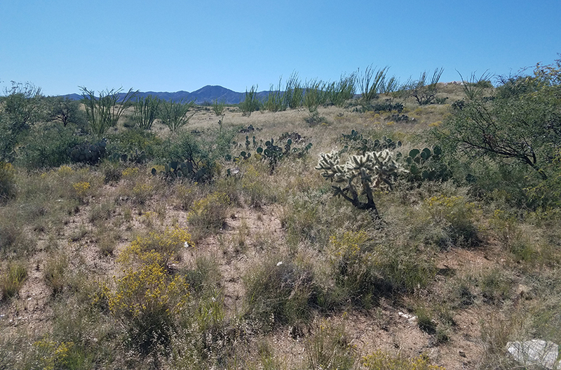 Arizona farm land for sale