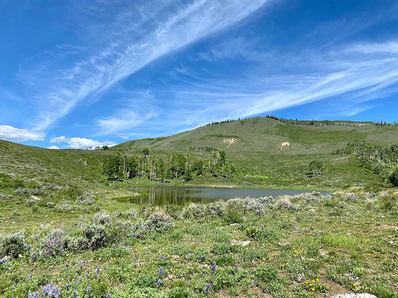 Colorado mountain cattle ranches for sale