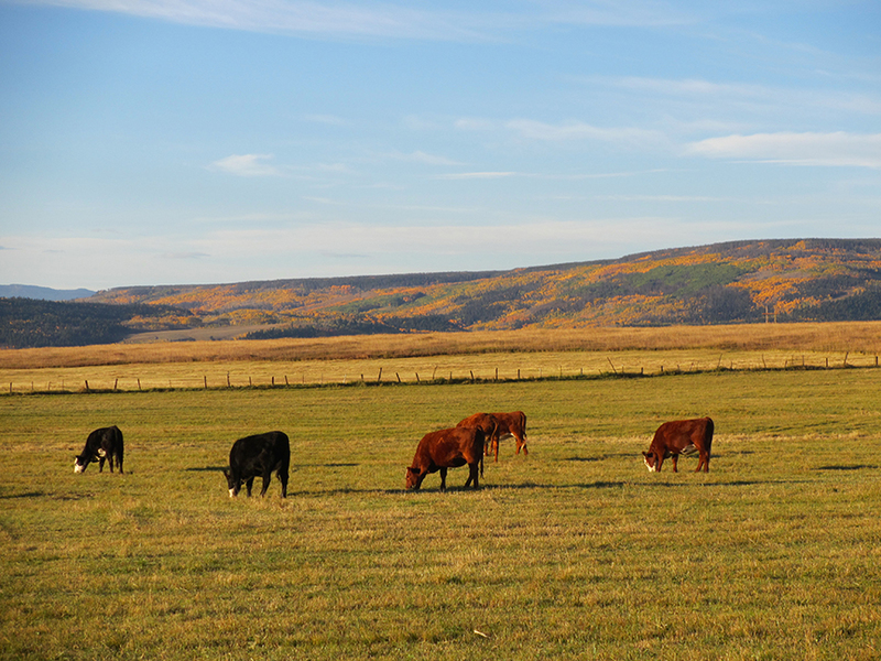 Colorado cattle properties for sale