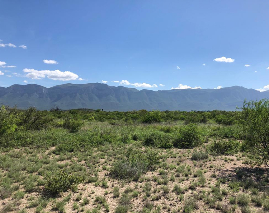 Land for sale in Mexico