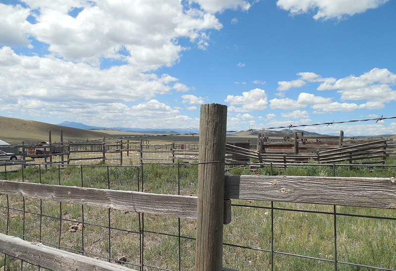 Colorado Cattle ranch