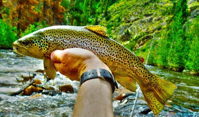 Fly-fishing in Wyoming