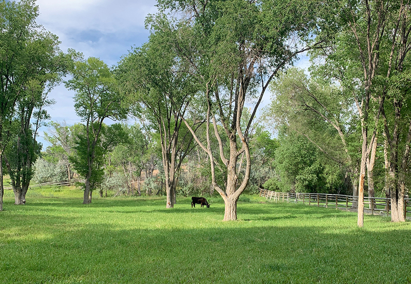 Cattle property for sale