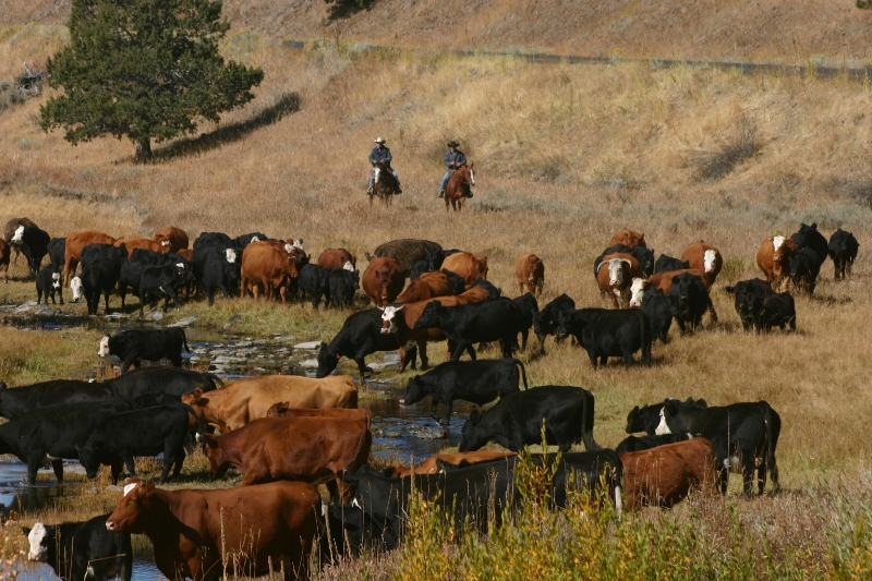 gutierrez ranch and cattle company   sold post oregon