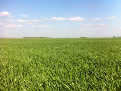 Corn and crop land for sale in Kansas
