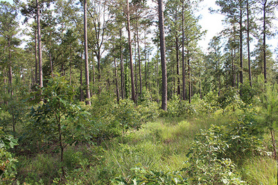 Forest land for sale in Texas