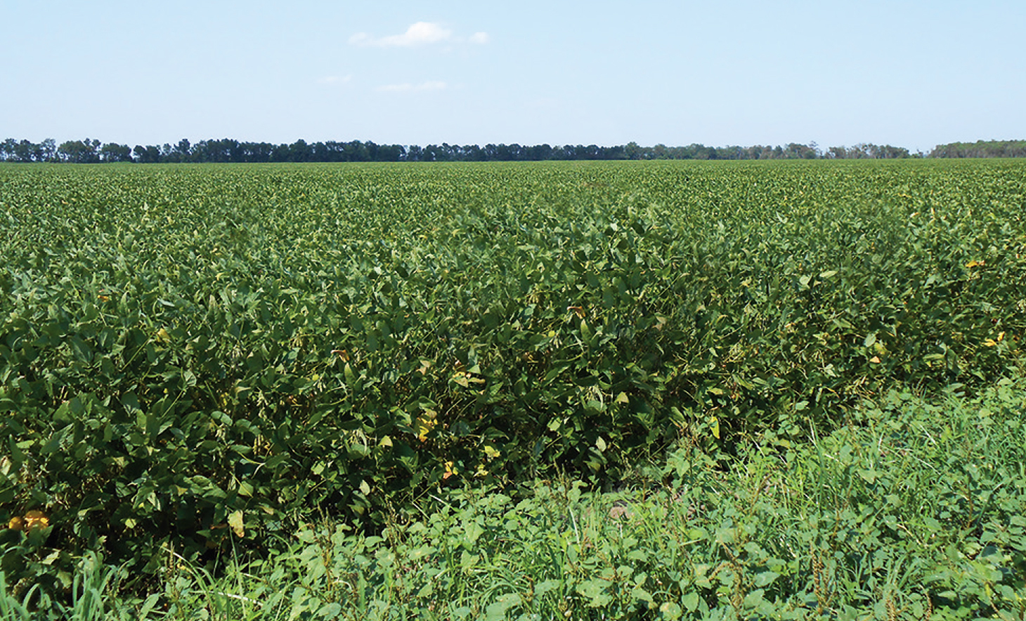 Productive Louisiana Farmland - SOLD