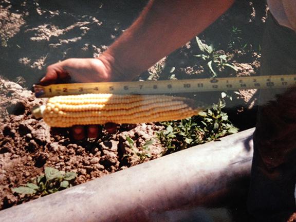 Montana Cb Route Irrigated Farm Sold Glendive Montana