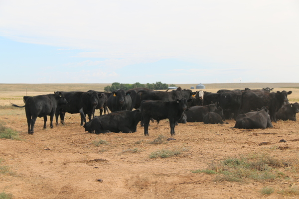 cattle operation for sale in Texas