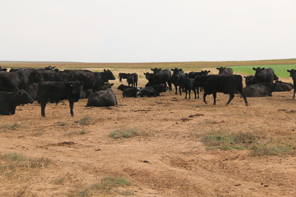 acreage for sale in Texas Panhandle