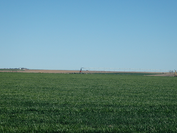 Farm land in Texas Panhandle for sale