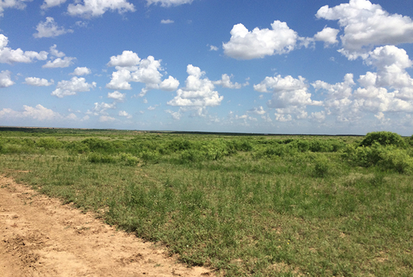 Texas acreage for sale