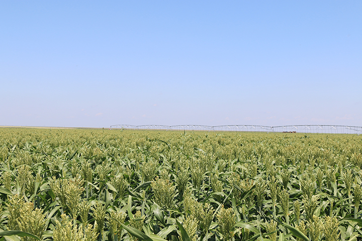 Texas Edlin 475-Acre Irrigated Farm - SOLD