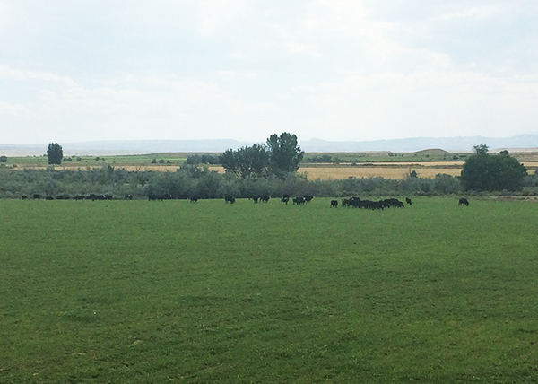 Lazy TS Irrigated Farm and Ranch in Wyoming