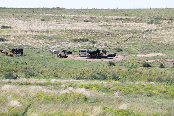 Land for sale Texas Panhandle