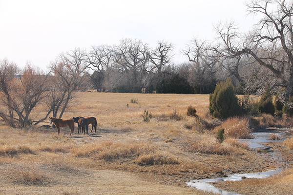 Oklahoma Panhandle ranch real estate
