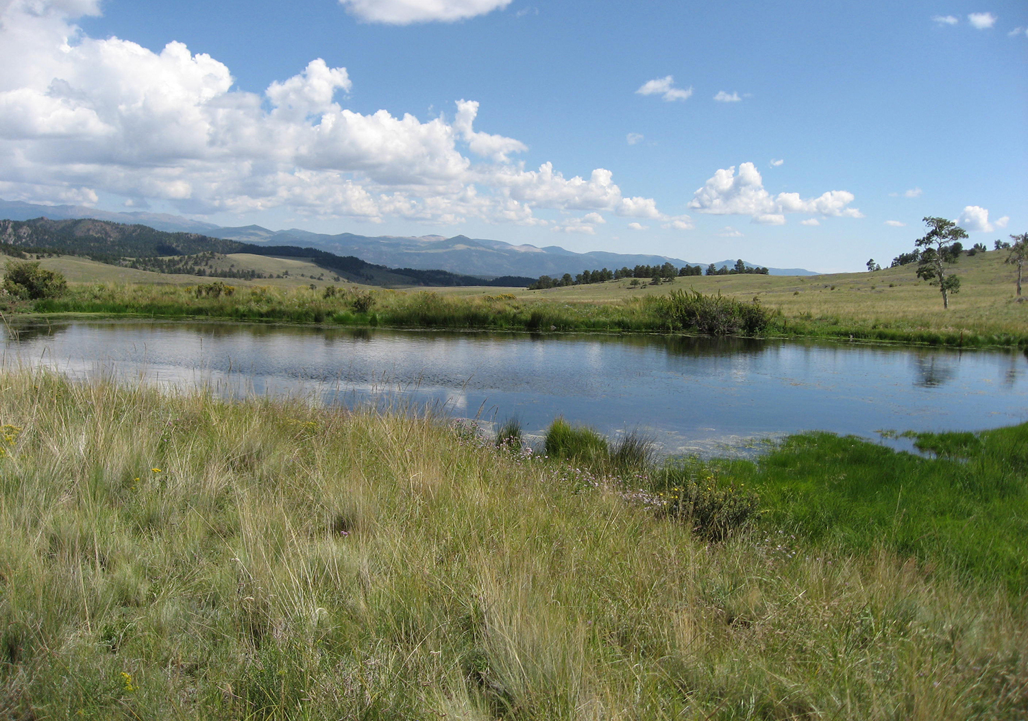 Cobb Creek Ranch in Colorado