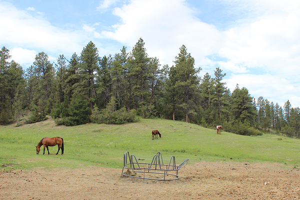 Equestrian Paradise Ranch in Montana