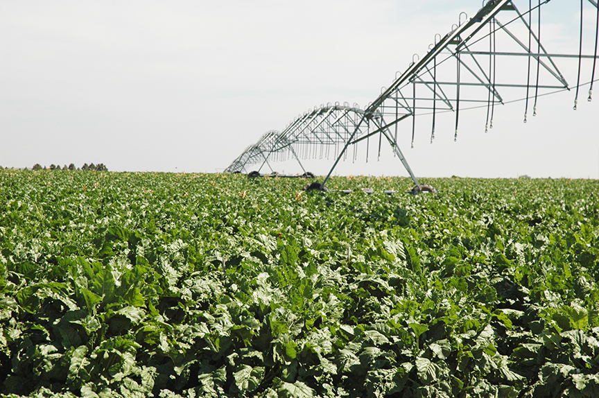 Gregory Irrigated Cropland & Pasture in Nebraska