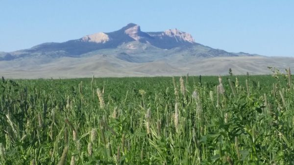 Wyoming irrigated land for sale