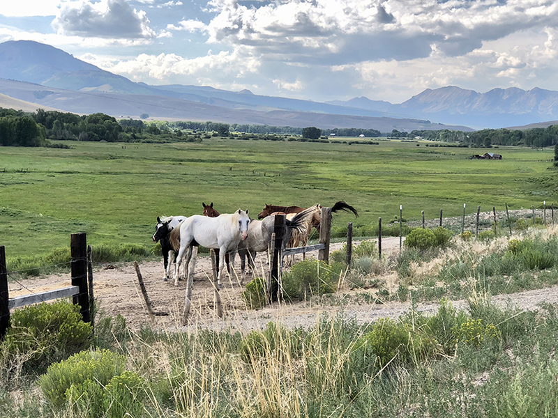 Horse property for sale in Colorado