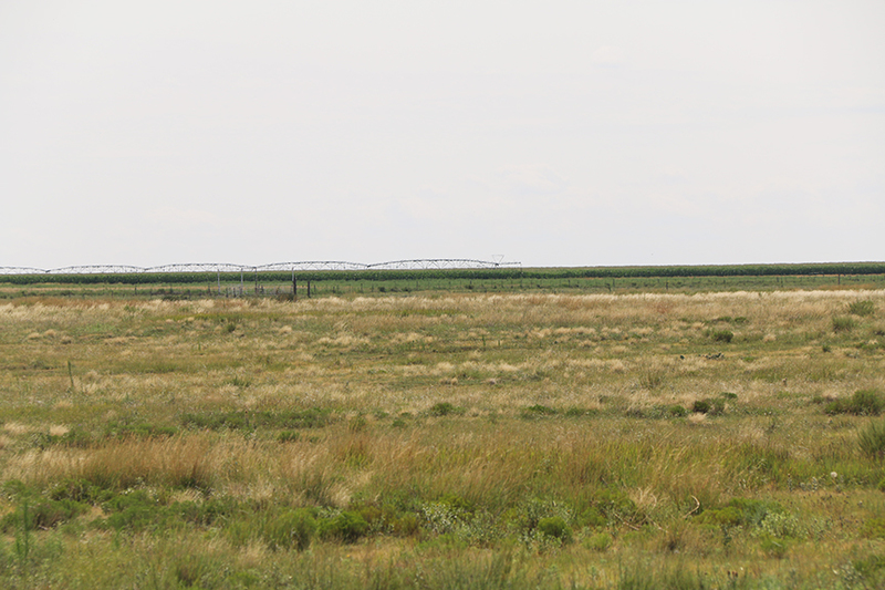 Texas Panhandle farm for sale