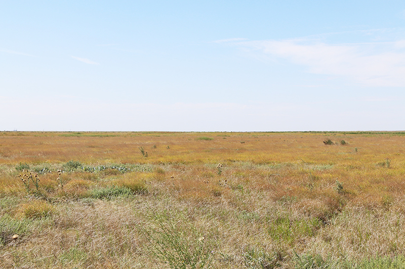 Eads Grassland in Texas