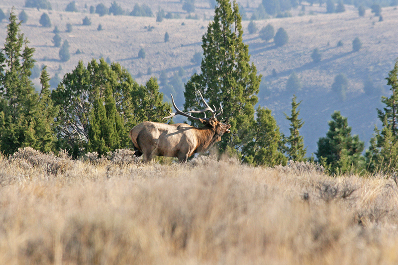 Oregon mule deer property