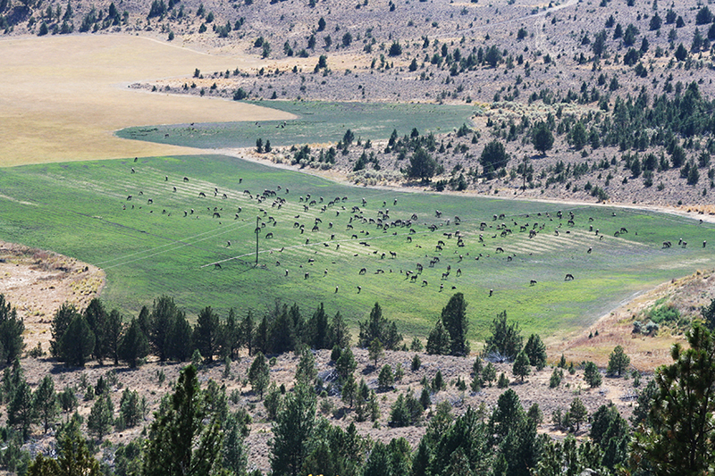 Oregon cattle ranch