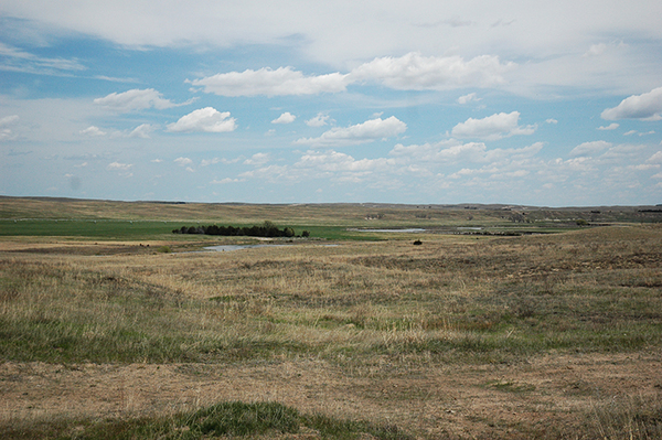 Nebraska cattle and crop land for sale