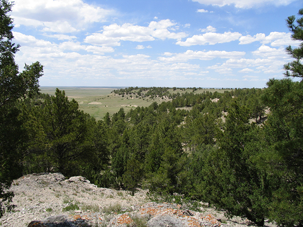 Cattle properties in Wyoming for sale