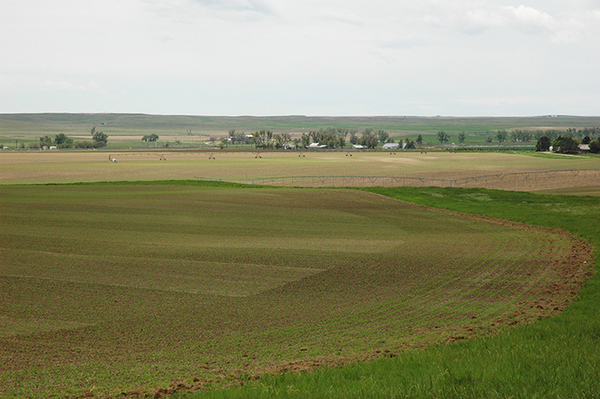 Lodgepole Creek Irrigated Farm - SOLD